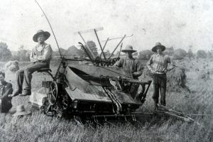 Threshing of the Wheat at site of Northfield plaza